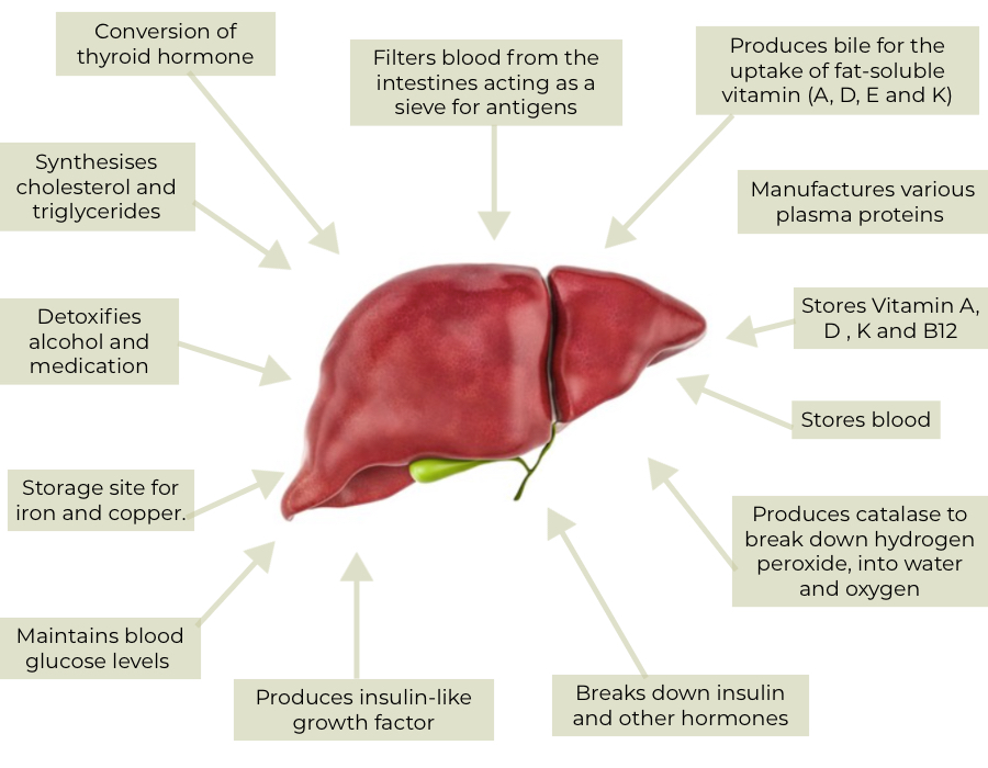 Liver function in relation to hair loss
