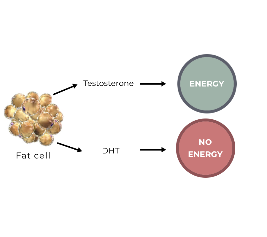 Testosterone and DHT for hair follicle energy