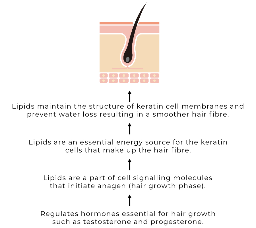 Fat metabolism and the hair fibre