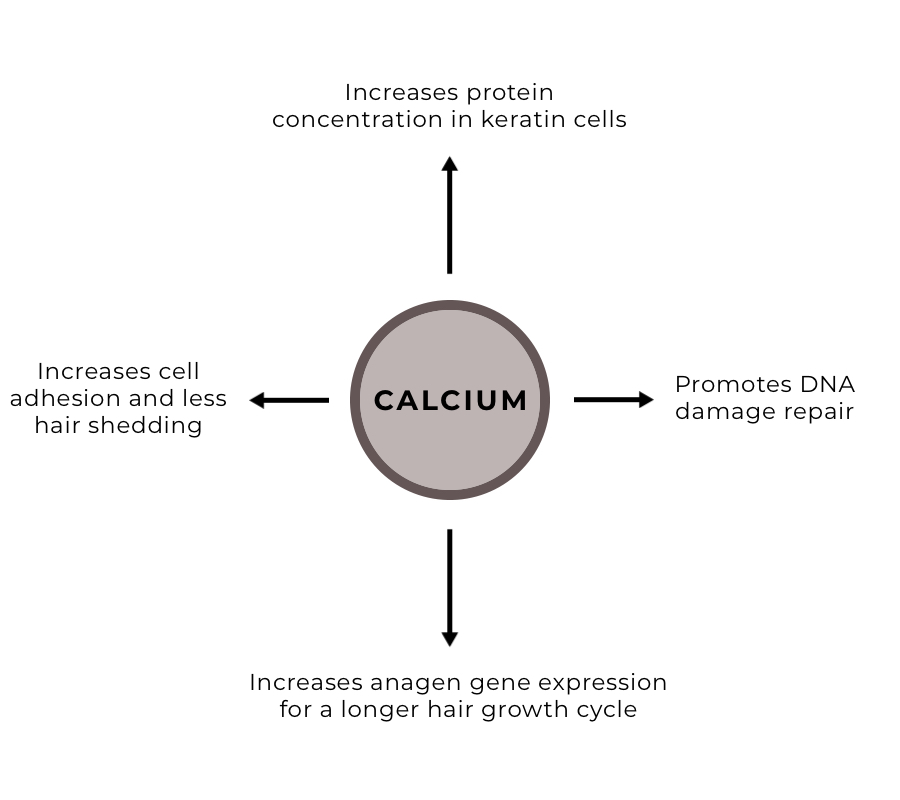 Calcium and hair growth