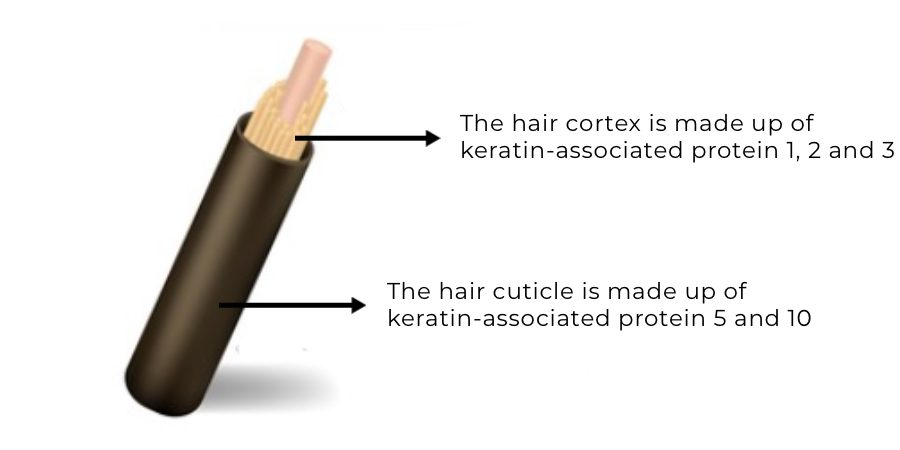 Calcium and hair loss