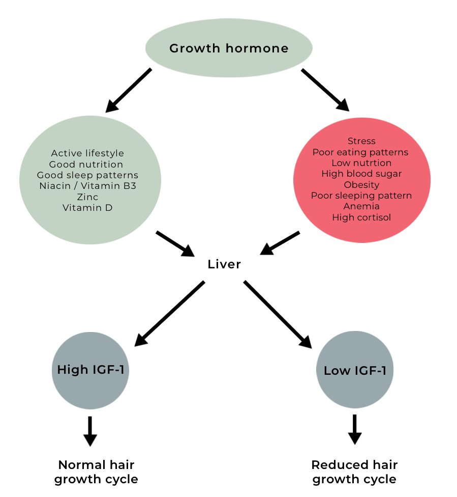 Growth hormone and hair loss